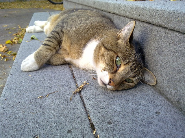 Cat lounging on a step